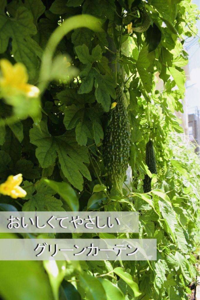 金城愛様作品「おいしくてやさしいグリーンカーテン」