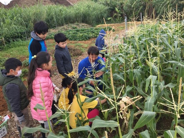 野菜の収穫模様